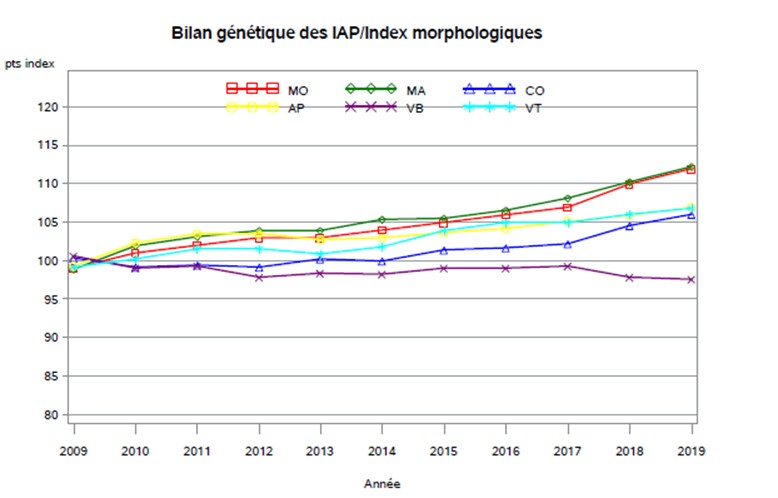 Bilan Génétique IAP - index morpho
