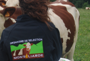 Du Herd-Book à Montbéliarde Association